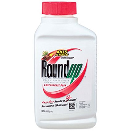 6. Roundup Weed and Grass Killer Concentrate Plus, 16-Ounce